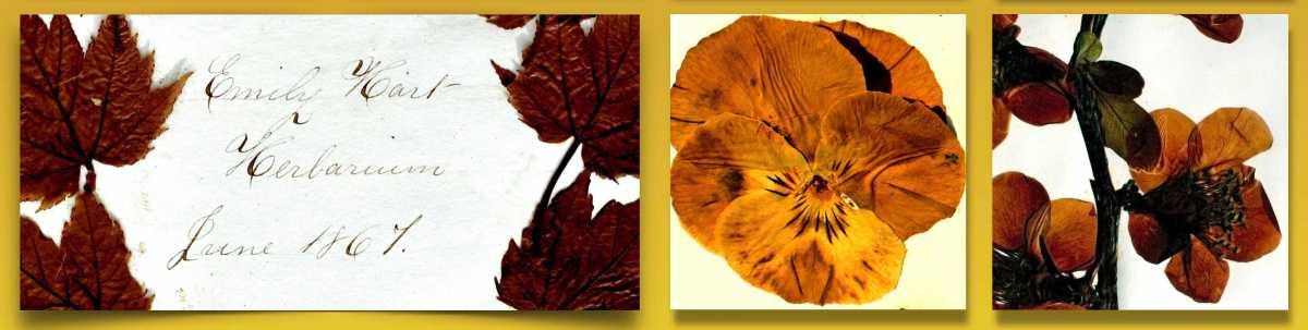 Herbarium Row 03