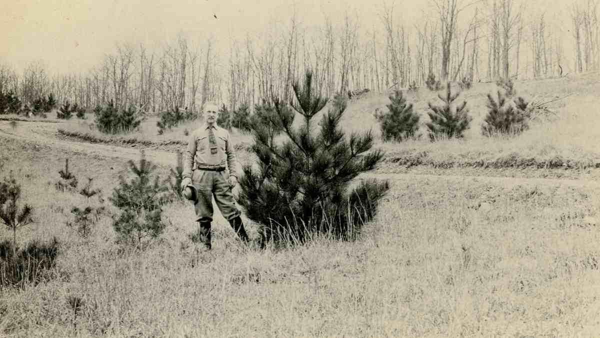 Wilcox Small Trees