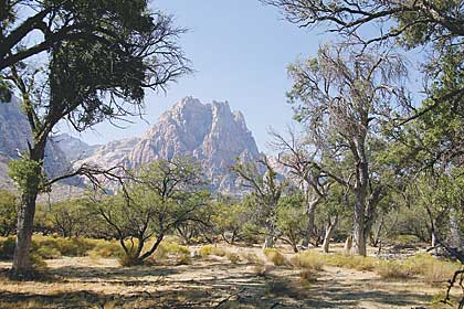 Nevada Dept Of Natural Resources