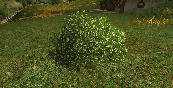 Rhododendron Jaune