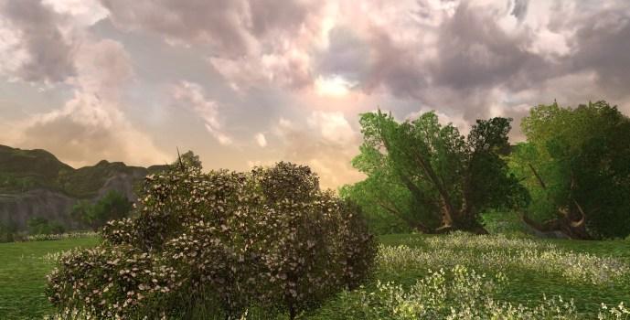 Grand Buisson de Roses Blanches d'Imloth Melui