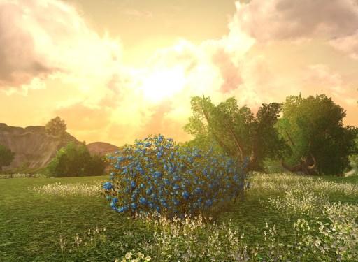 Grand Buisson de Roses de Cemenduril d'Imloth Melui