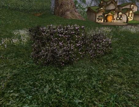 Petit Buisson de Roses Blanches d'Imloth Melui