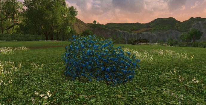 Petit Buisson de Roses Cemenduril d'Imloth Melui