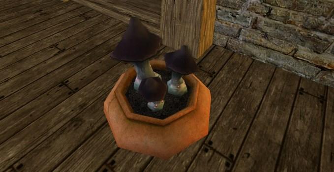 Bocal de champignons noirs