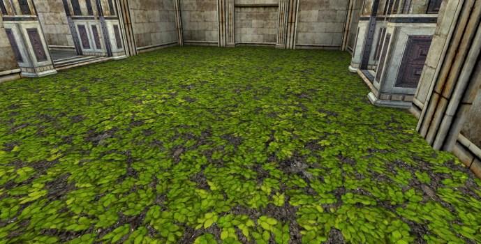 Sol de feuilles de bouleau