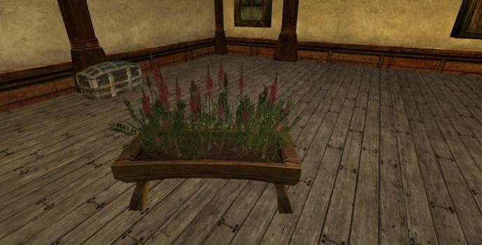 Jardinière surélevée de Rhinante