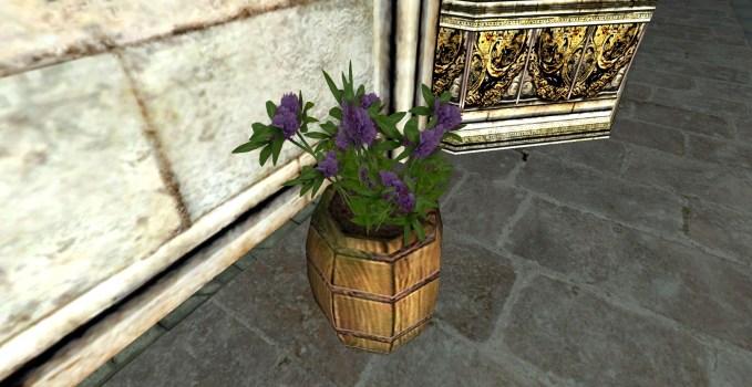 Tonneau de Trèfle Violette