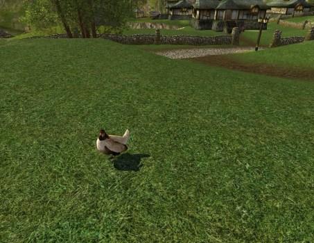 Pauvre poulet de pelouse