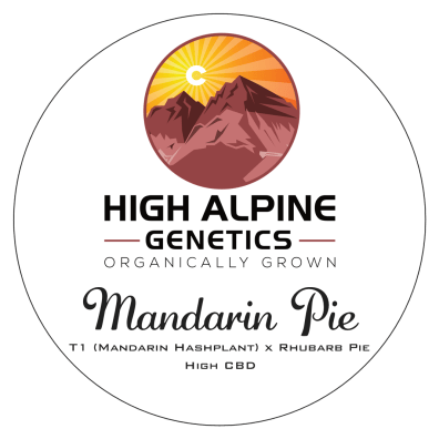 Mandarin Pie F1 (T1 x Rhubarb Pie) 10 Regular High CBD Seeds