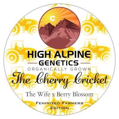 The Cherry Cricket (The Wife x Berry Blossom) 10 Feminized High CBD Seeds