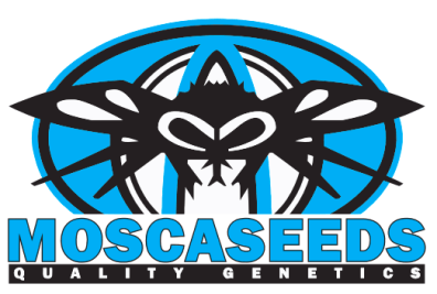 New Order (Triangle Kush x Fire Alien White) 12 Regular Seeds