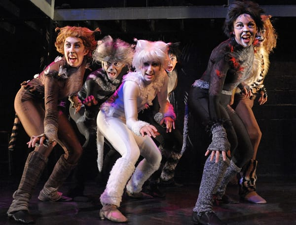 The cast of Cats at Compass Rose Theater (Photo: Stan Barouh)