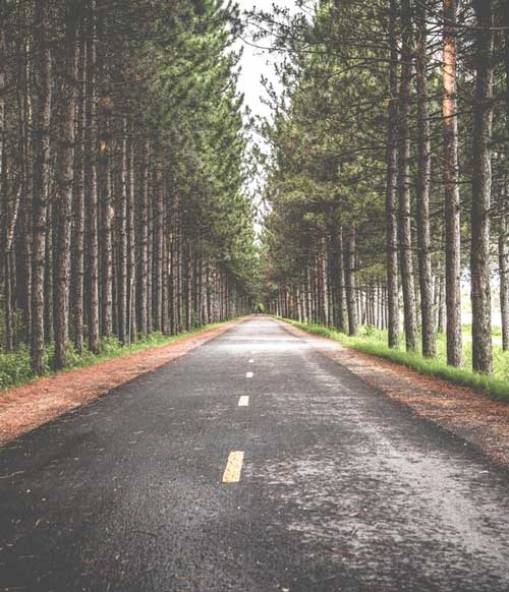 Recovery from trauma, PTSD and related issues is a long road but with the help of a compassionate trauma counselor, it's a road you don't have to travel alone.