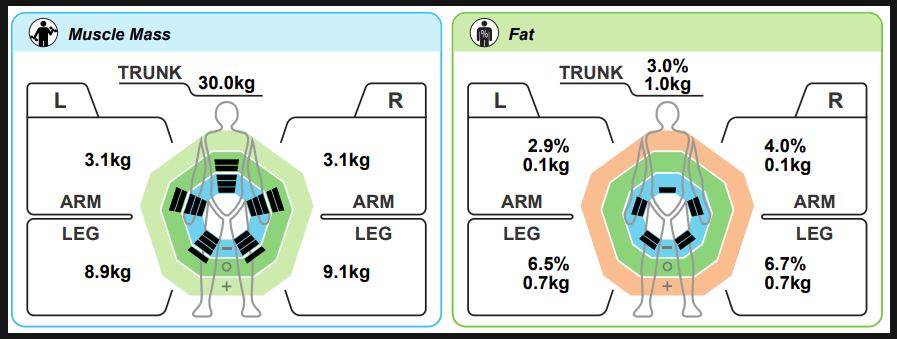 musclemass-bodyfat-diagram
