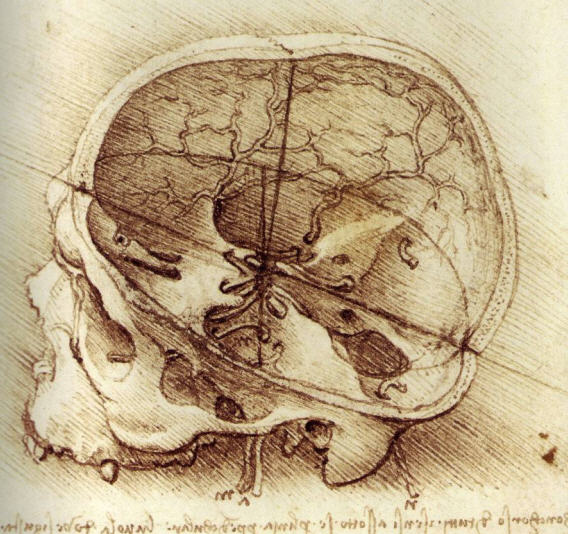 Da Vinci study of a cut skull