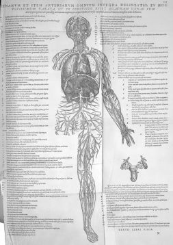 800px-Vesalius_blood_vessels