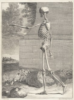 Skeleton-Image-02-by-Jan-Wandelaar-1690-1759-from-Bernhard-Siegfried-Albinus-Tabulae-sceleti-circa-1749