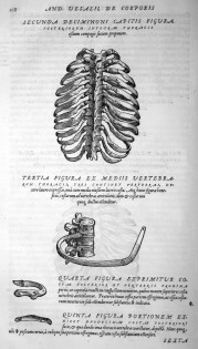 Vesalius_chest_bones