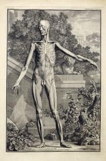 albinus-musculorum-tabula-ii