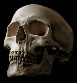 skulls (5)