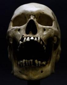 skulls (6)
