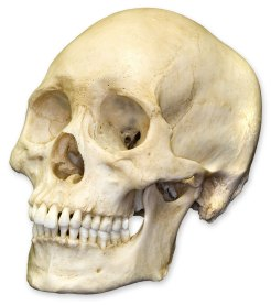skulls (8)