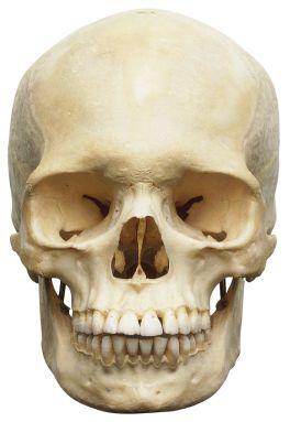skulls (9)