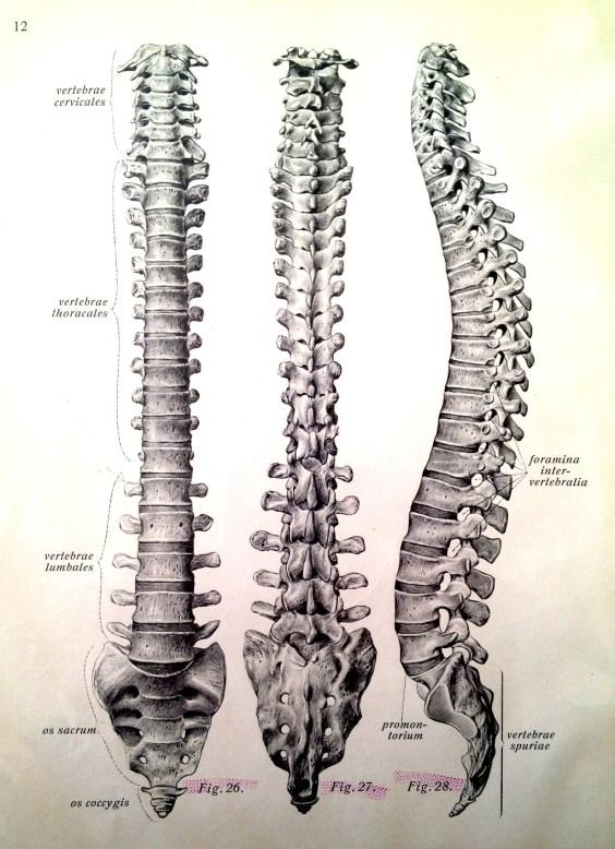 spine (5)