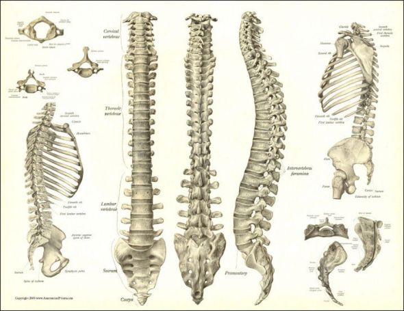 spine (6)