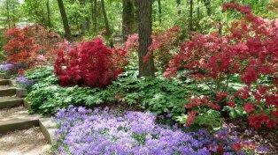 Nemzeti Arborétum - azáleadomb