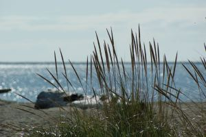 A photo of a beach, with the water obscured by weeds in the foreground.