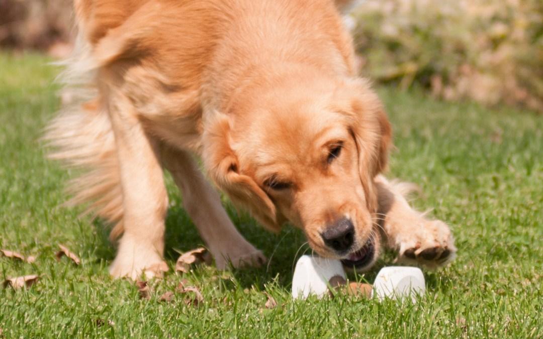 Dog Training Dumbbell