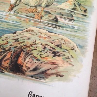 centsprent antiek poster