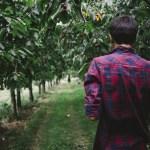 orchard-walk_barnimages_upl