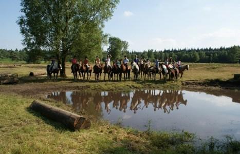 Ponykampen 2012