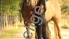 Ponykamp 2018 week2 Manege de Woelige Stal Ede