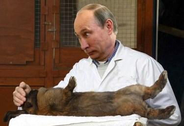 Putin kaninchen