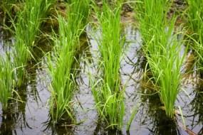 FAO unterstützt den ökologischen Landbau