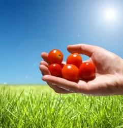 Camu Camu: Hauptquelle für Vitamin C