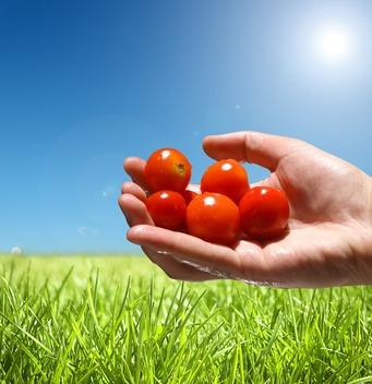 Life-Cycle-Technologie in Lebensmitteln