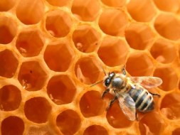 Bienenwachs: Rezepte für Ihre Haut