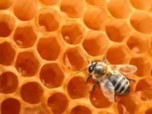 Der Bienenstock: Gelée Royale, Pollen, Honig, Wachs ...