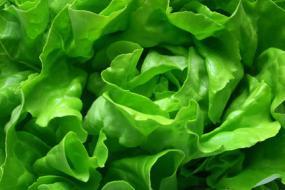 Dunkles Blattgemüse: große Nutzen für die Gesundheit