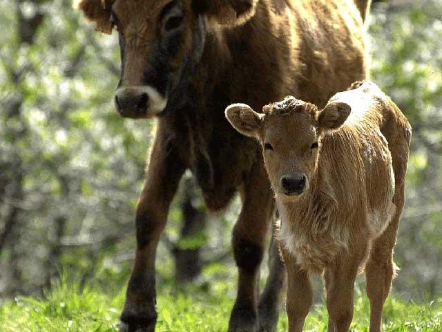 Ökologische Viehzucht in Andalusien