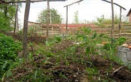 Frisch gepflanzt und gemulcht