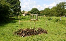 Junge Streu-Obstwiese und Waldgarten