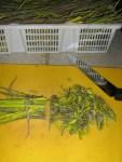 Silberweidenrinde klein schneiden zum Trocknen