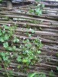 Kostenlos Garten gestalten DIY Flechten - Der einfache Weg Flechtwand von Nah