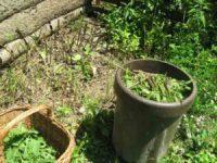 12 Wege Brennessel anwenden und Rezepte Brennesseln nach dem groben Schnitt